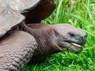 Želva sloní (Geochelone nigra) je největší žijící pozemní druh želvy. Žije jen na Galapágách, dožívá se více než 100 let a váží až 250 kg. Na každém zostrovů Galapág se vyskytuje jiný poddruh, do dneška přežilo 11 poddruhů.
