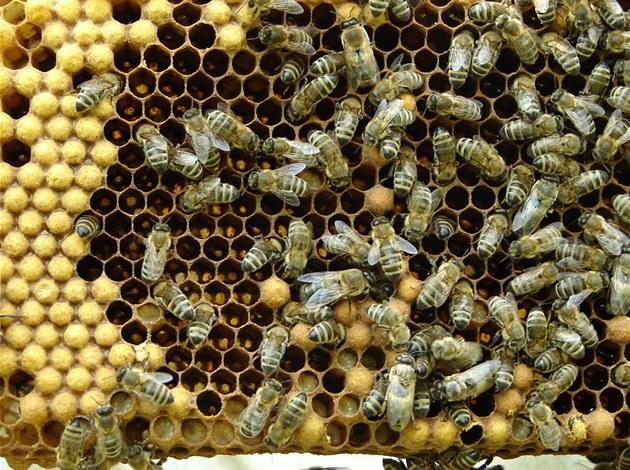 Včely z pražského Toulcova dvora