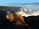 Jiný svět (mořský leguán, Galapágy, Ekvádor). Jen na několika dostupných místech na Galapágách najdete tak nádherně zbarvené leguány s příbojem v pozadí. Za fotku jsem ale málem draze zaplatil. Při hledání nejlepšího úhlu mě nečekaně vysoká vlna srazila na zem a málem spláchla z útesu do rozbouřeného moře.