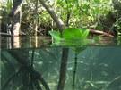 Záběr z připravovaného Lichtagova snímku Aldabra