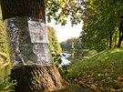 Povodí Labe plánuje pokácet letité stromy na hrázi Orlice v Hradci Králové.