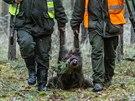 Druh� velk� hon na p�emno�en� divok� prasata se uskute�nil v okol� Mn�ku pod Brdy v prosinci 2013.