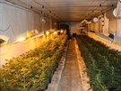 Policie našla na Královéhradecku pěstírnu marihuany.