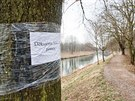 Stoletým stromům na břehu Orlice v Hradci Králové hrozí vykácení.
