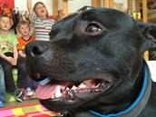 Stafík, nejideálnější pes pro canisterapii