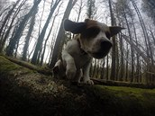 Charlie je aktivní a miluje procházky.
