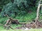 Kvůli podmáčenému terénu se sesunul svah u Dolních Věstonic (14. září 2014).