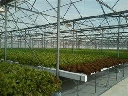 Plánovaná podoba hydroponického pěstování rostlin.