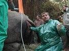 Speciální zákrok ve dvorské zoo má vést k tomu, aby samice nosorožce Nabiré mohla mít potomka.