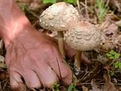 Za�ínají r�st podzimní druhy, ale po�ád najdete i bedly nebo t�eba �ampiony....