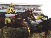 NA TAXISU, Vítězná hnědka Orphee des Blins s Janem Faltejskem (v bílém) překonala Taxis jako jedna z prvních.