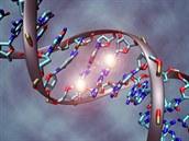 Ilustrace DNA, která zvýrazňuje tzv. metylaci DNA. To je připojení malé chemické skupiny k bázím DNA a představuje velmi běžný způsob, jak se v živých organismech mění aktivita genů.