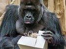 I gorily milují dárky. Zvláště ty jedlé, nebo skrývající něco k jídlu.