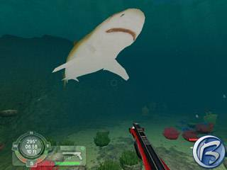 Screenshot ze hry Shark!