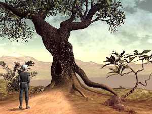 V dutině tohoto stromu sídlí mocné Driády