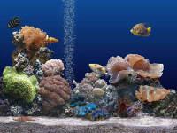 Marine Aquarium 2.0 - větší obrázek z programu
