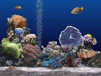 Marine Aquarium Time 1.1 - větší obrázek z programu