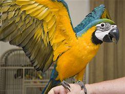 Papoušek ara by se měl denně prolétnout.