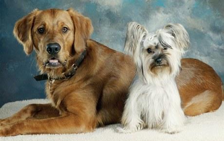 Než si pořídíte psa, spočítejte si, jak jeho životní nároky zatíží váš rozpočet